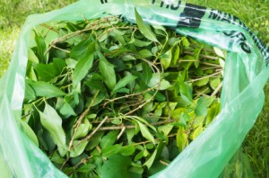 Green Waste Sorting